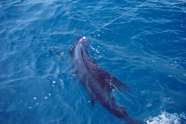Guatemala, Sailfish, The Great Sailfish Co, Aardvark McLeod, fishing Guatemala, holiday in Guatemala