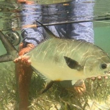 Pesca Maya, Yucatan, Mexico, fishing, Aardvark McLeod, fishing in Mexico, bonefish, snook, permit tarpon, holiday in Mexico