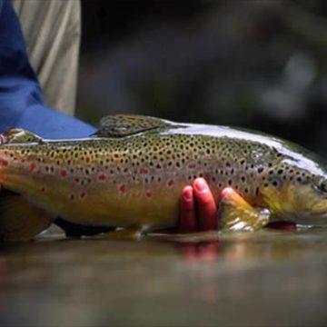 Poronui Ranch, New Zealand, Aardvark McLeod, trout