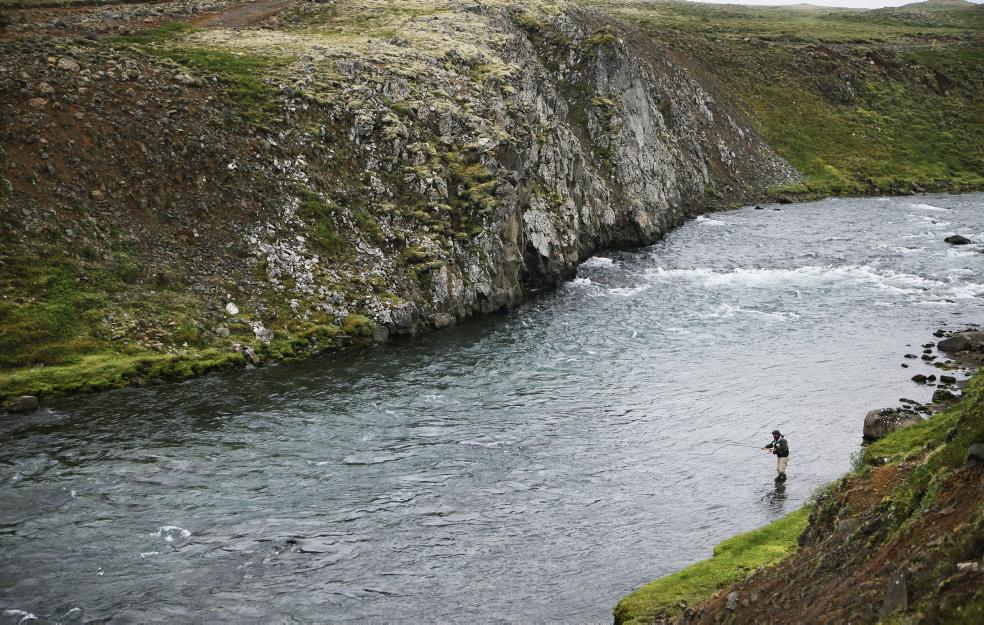 Atlantic salmon, Hafralonsa, Iceland