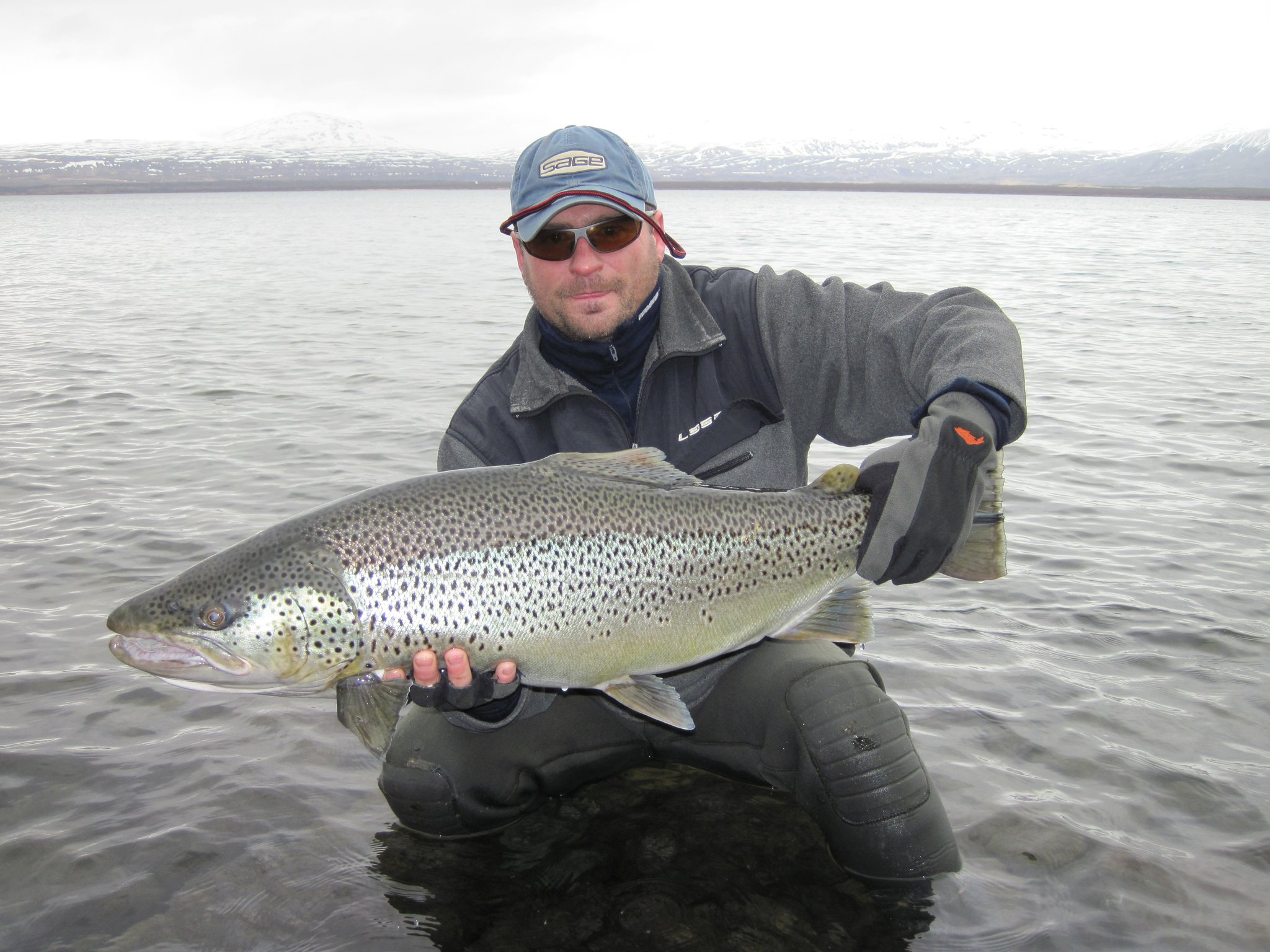 Iceland s monster wild brown trout lake thingvallavatn for Fish s wild