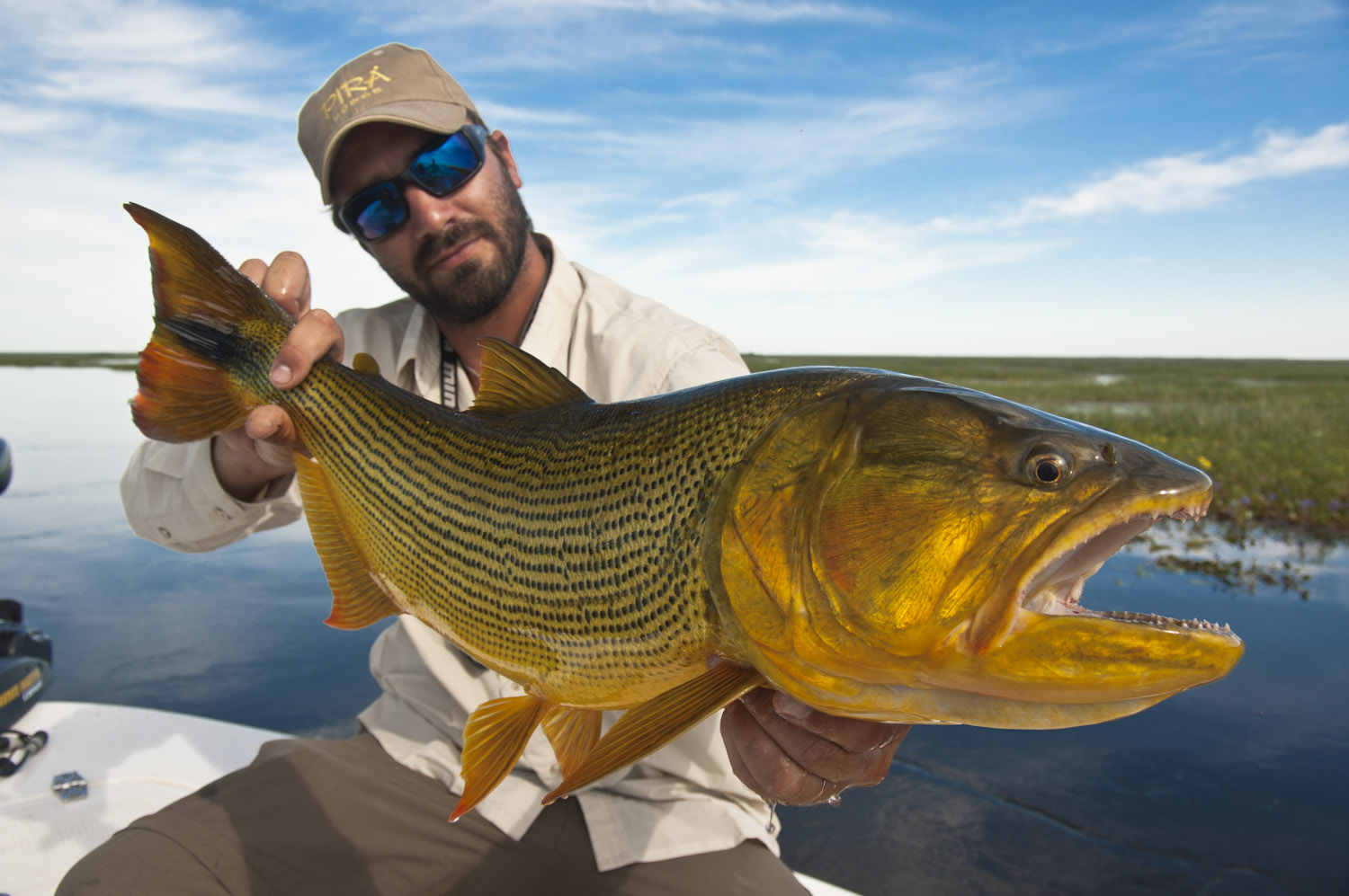 Fishing at pira lodge argentina for golden dorado for Trolling for fish