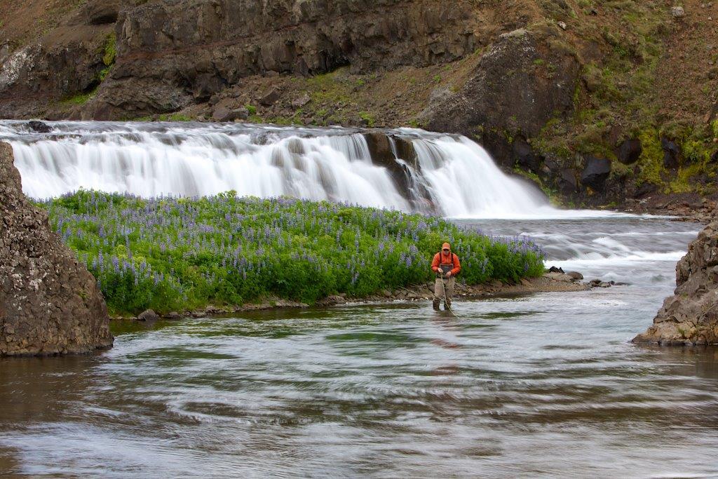 Salmon Fishing Grimsa River Iceland