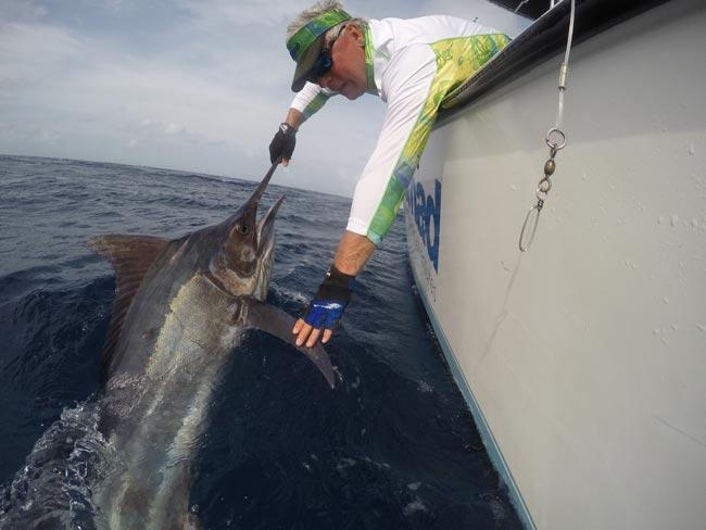 Australia Black Marlin