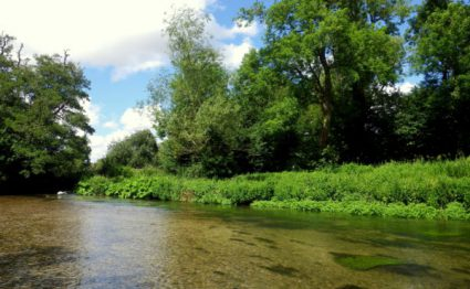 Brown Trout, Wiltshire chalkstream fishing, Grayling, Aardvark McLeod