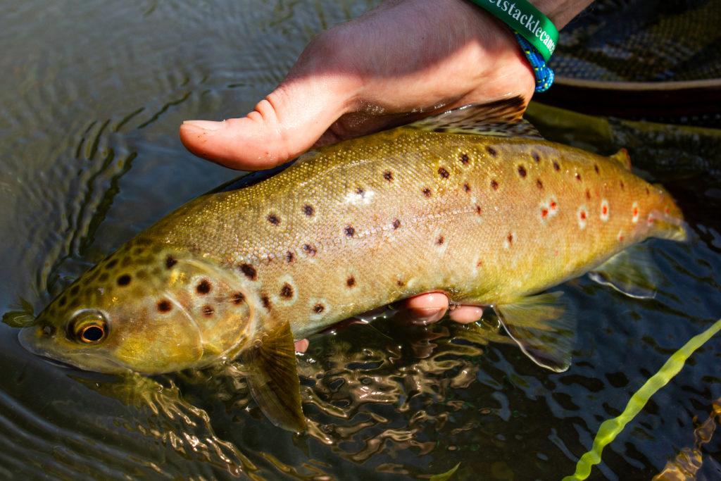 River Kennet Chalkstream fly fishing, Dry Fly Fishing, Alex Jardine, Aardvark McLeod Dry Fly Fishing