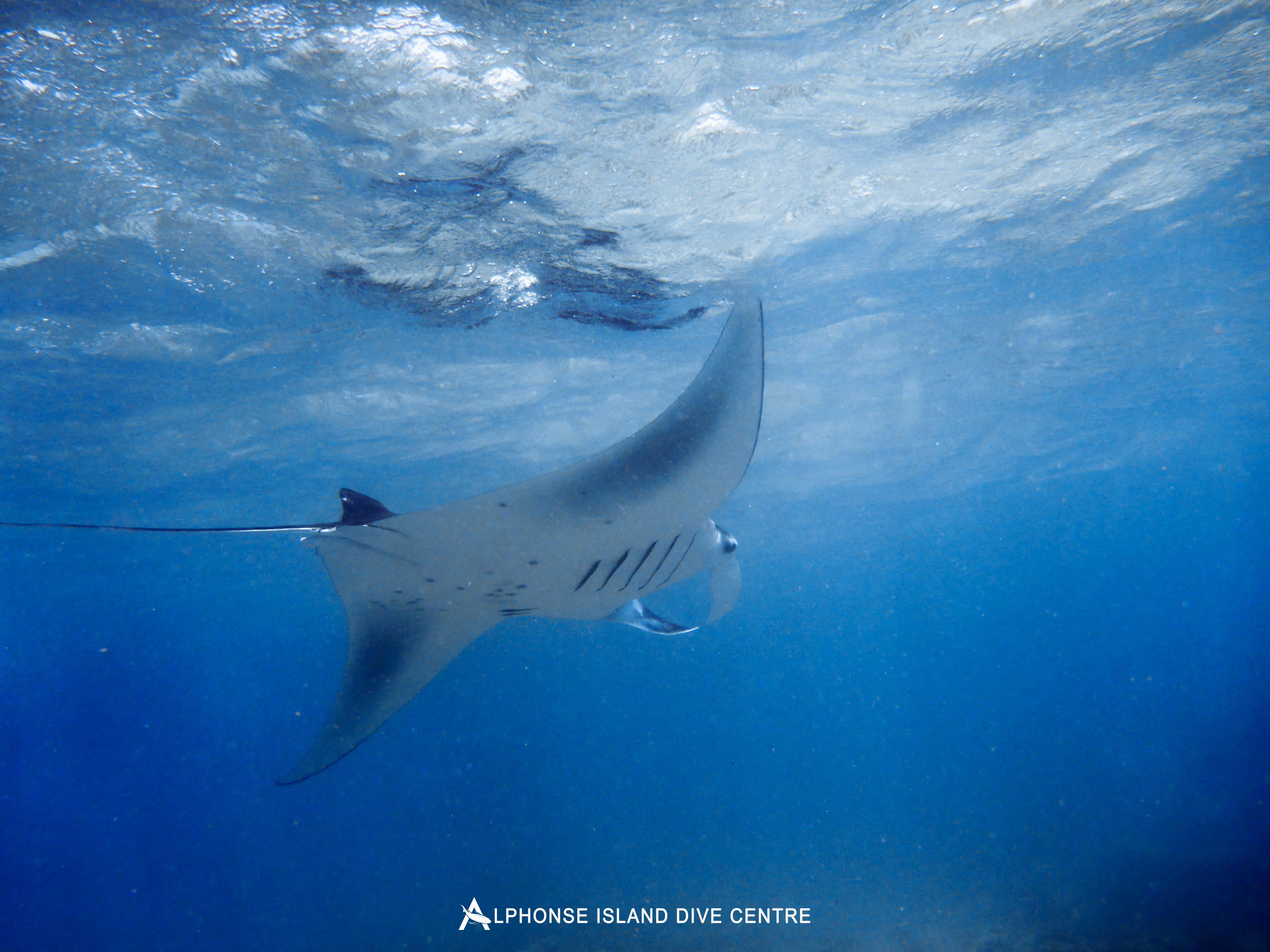 Alphonse Island Seychelles diving