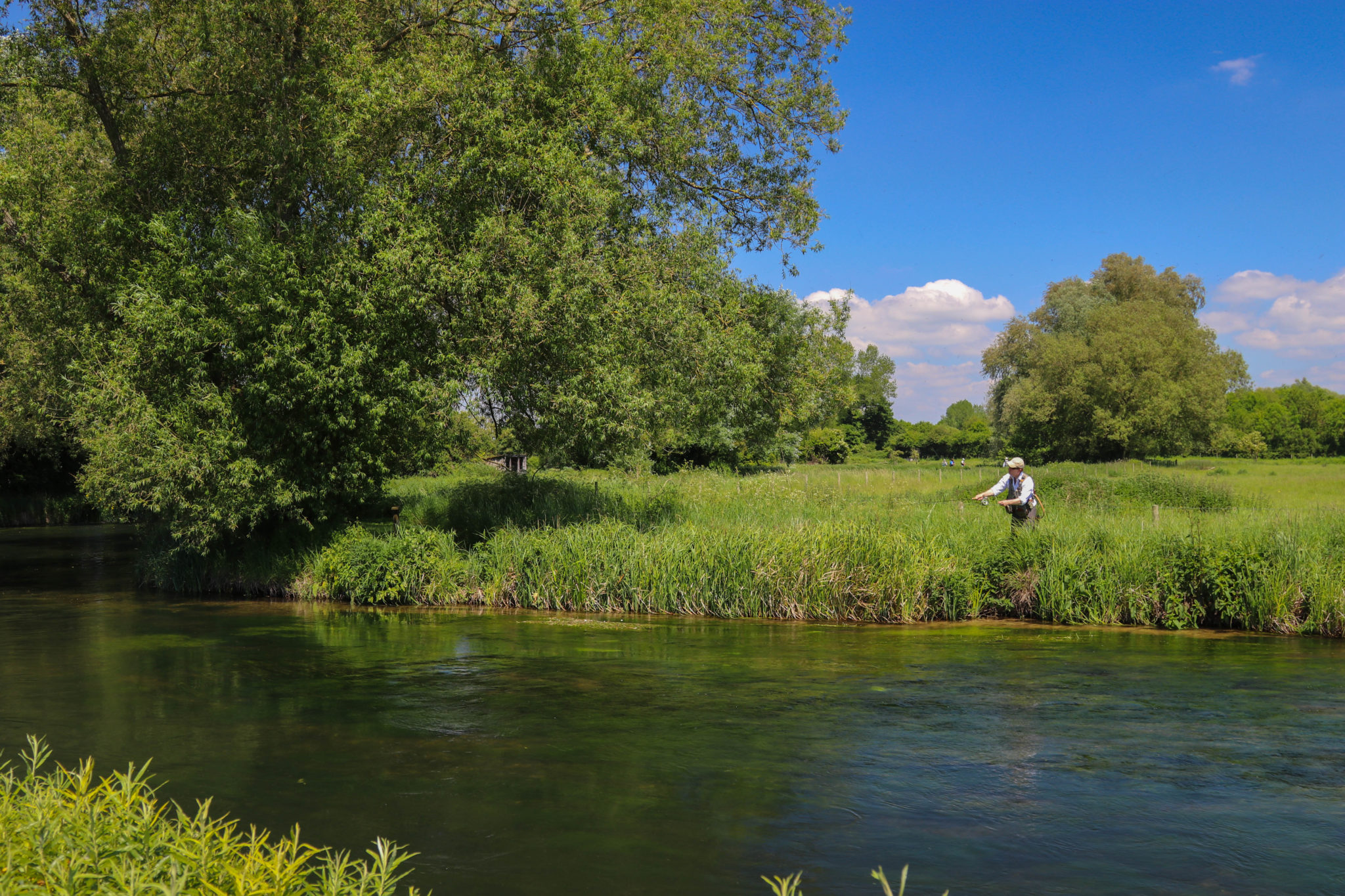 Mayfly 2020 availability, River Test Chalkstream fly fishing, Dry Fly Fishing, Alex Jardine, Aardvark McLeod Dry Fly Fishing