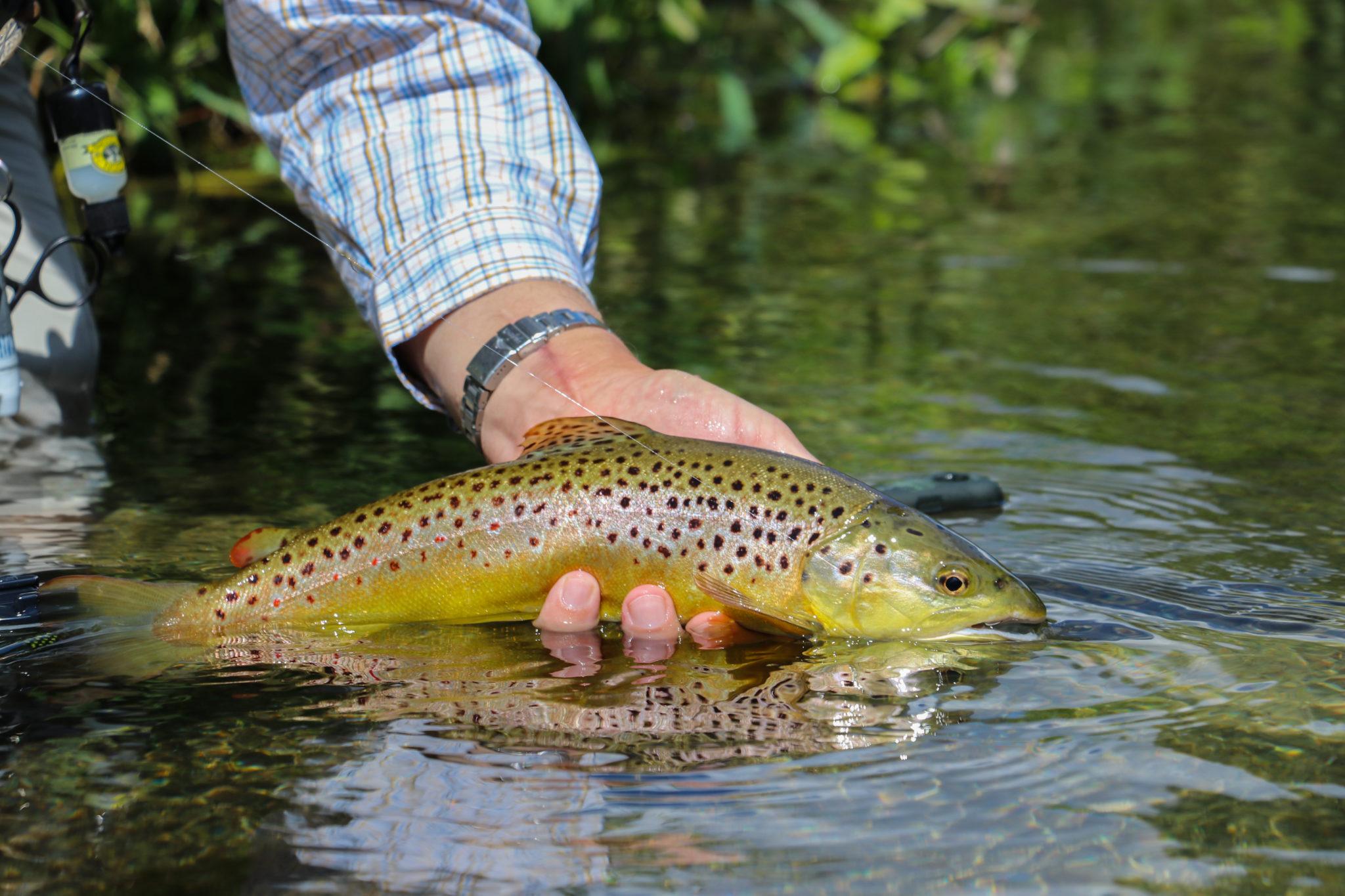 Mayfly 2020 availability, River Anton chalkstream fly fishing, Aardvark McLeod chalkstream fly fishing