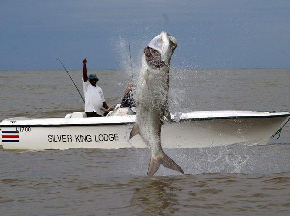 Silver King Lodge, Tarpon, Costa Rica, Aardvark McLeod