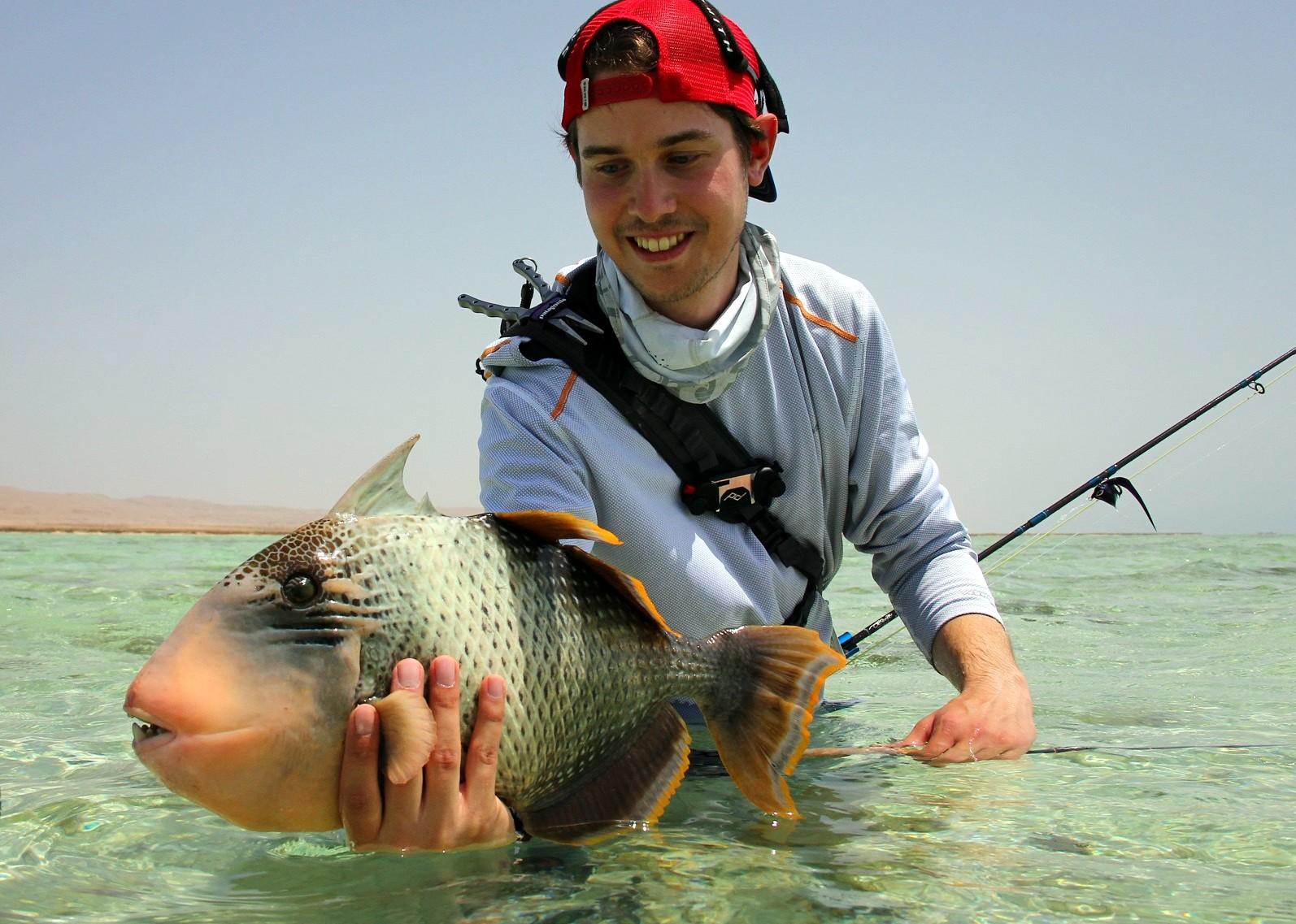 Yellow margin triggerfish, Nubian Flats, Sudan, Aardvark McLeod