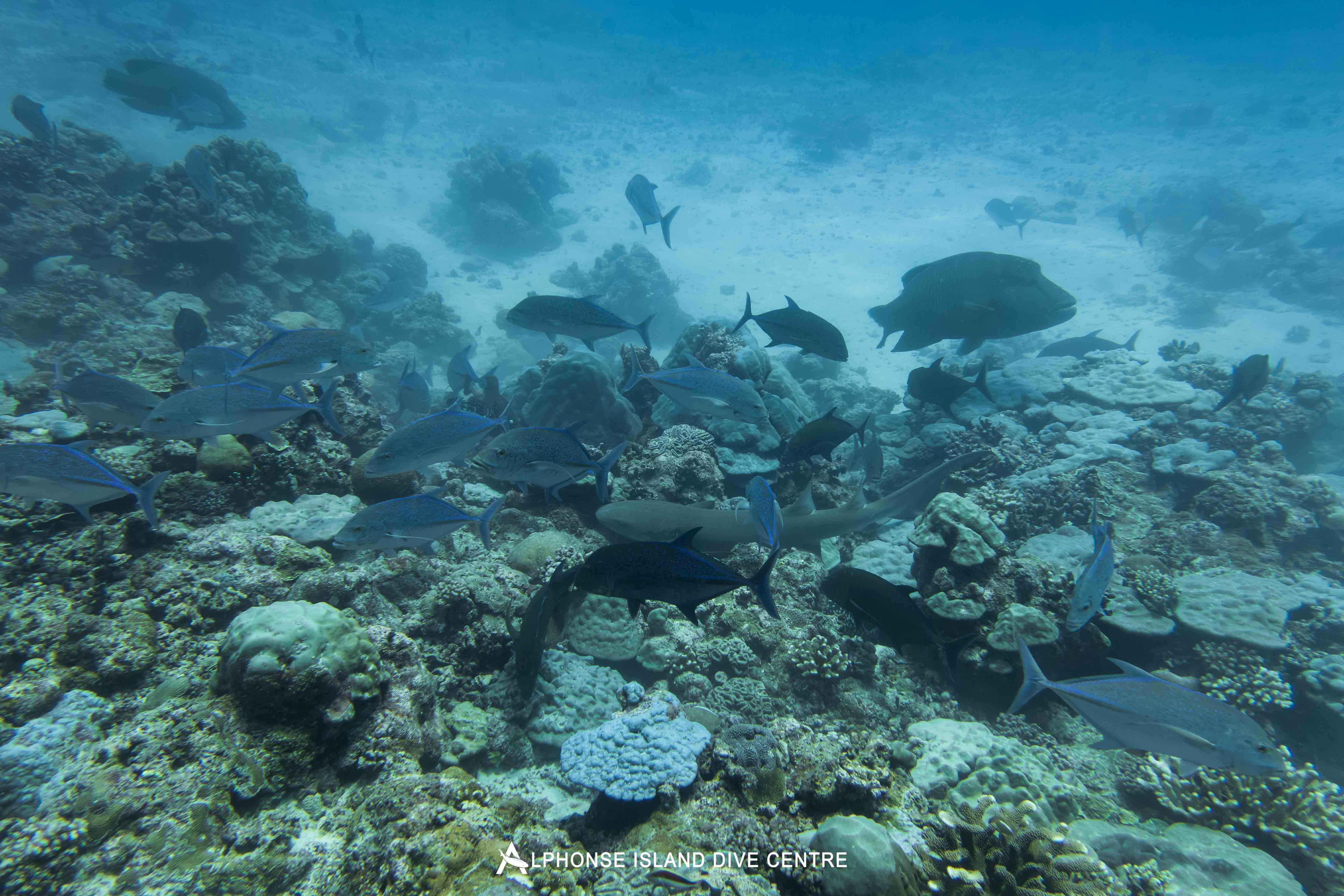 Aardvark McLeod Alphonse Island diving