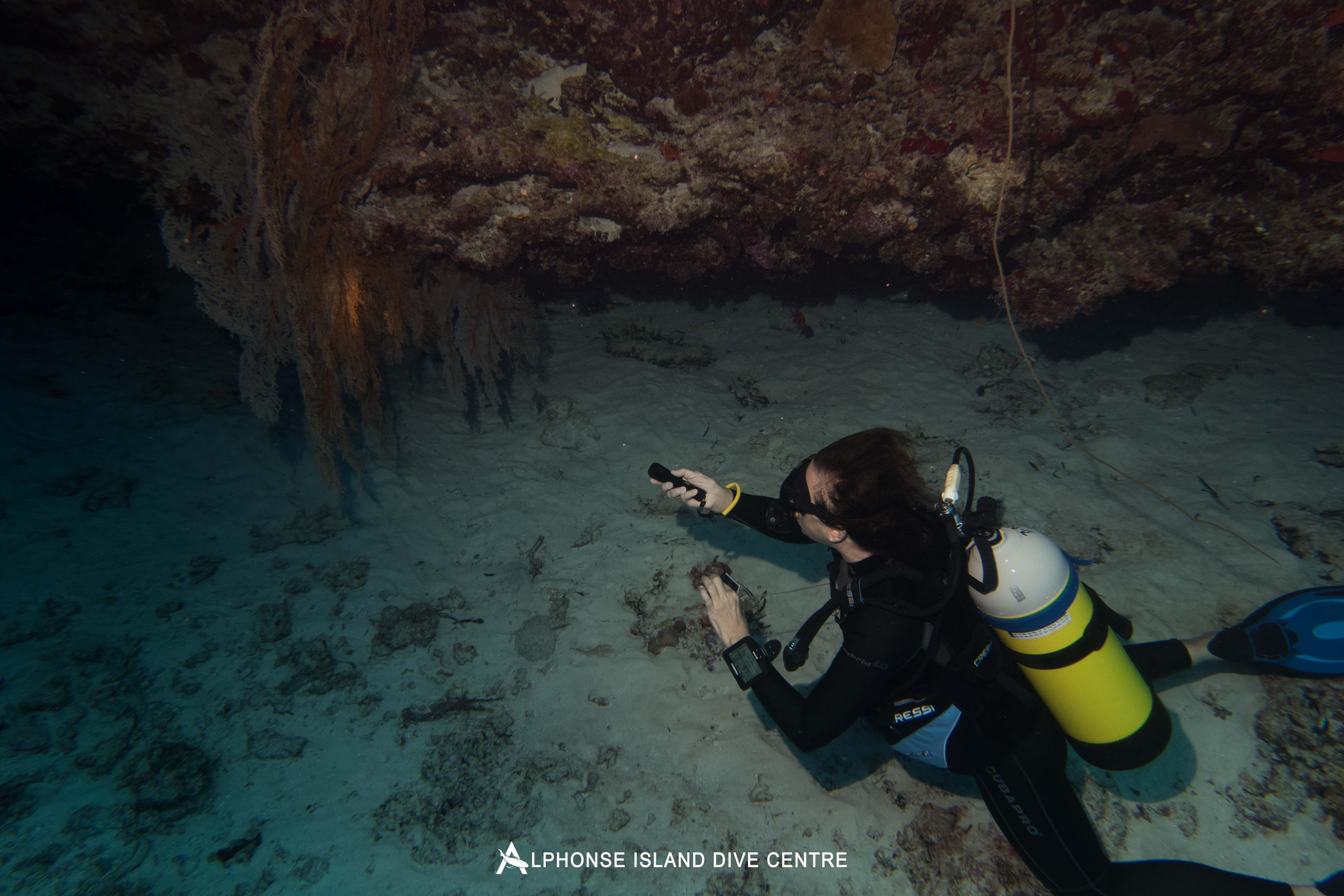 Alphonse Island diving Aardvark McLeod