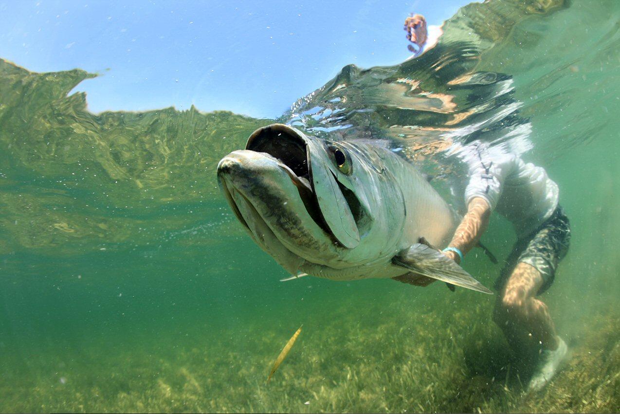 Cayo Santa Maria, Cuba fly fishing, tarpon