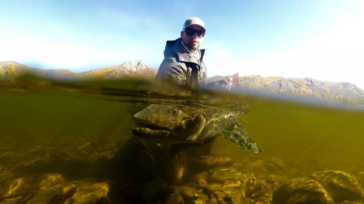 Mongolia swinging flies for 40 lbers by alex jardine for Taimen fishing mongolia