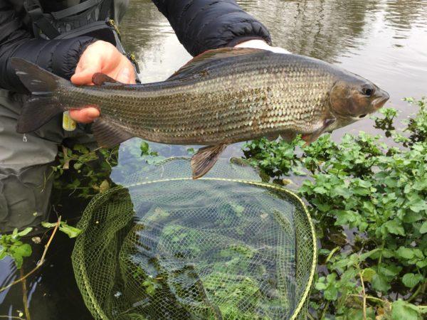 chalkstream fishing, grayling, UK Fishing Guide