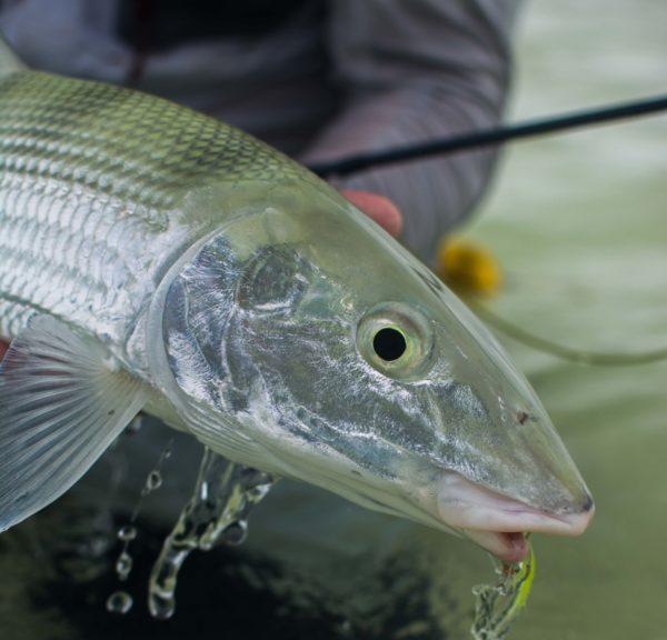 Seychelles, Alphonse, bonefishing, Seychelles holiday