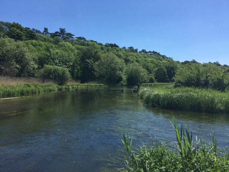 River Test Hampshire, Mayfly, brown trout, chalkstream, dry fly, Aardvark McLeod