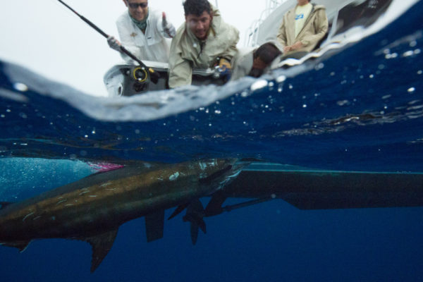 Blue Marlin Mothership Expedition, Costa Rica, Aardvark McLeod