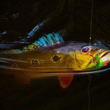 Rio Marie, Brazil, fishing in Brazil, peacock bass, Aardvark McLeod