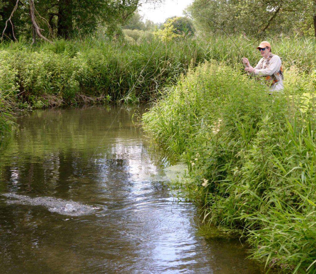 River Kennet, Chalkstream fishing, Berkshire, UK fishing guide