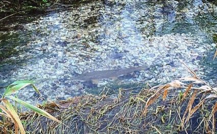 Bourne Rivulet, Hampshire chalkstream fishing, trout fishing, Aardvark McLeod, fishing the River Test