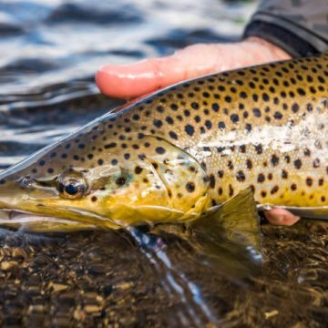 Smith River, Fly Fishing, Montana, River Fishing, Trout Fishing, Fishing Guide, Aardvark McLeod
