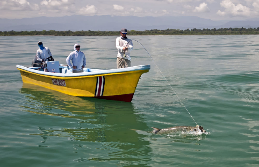 Tarponville, Costa Rica, Aardvark McLeod