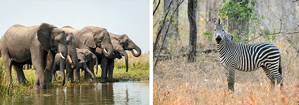 Malawai, Liwonde, Kuthengo Safari Camp, safari in Malawi, holiday in Malawi, Liwonde National Park