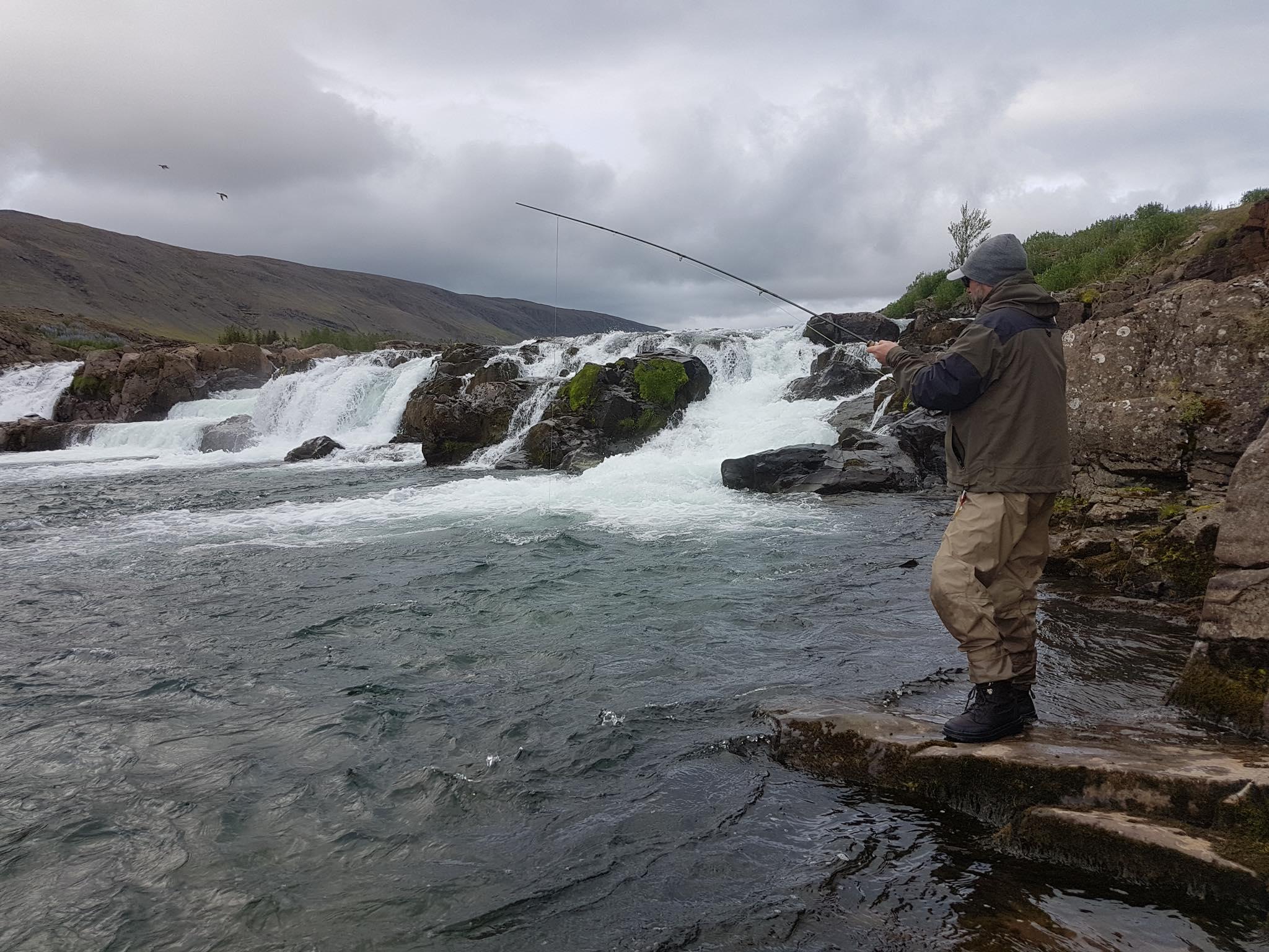 Atlantic salmon, Laxa I Kjos, Iceland, Aardvark McLeod
