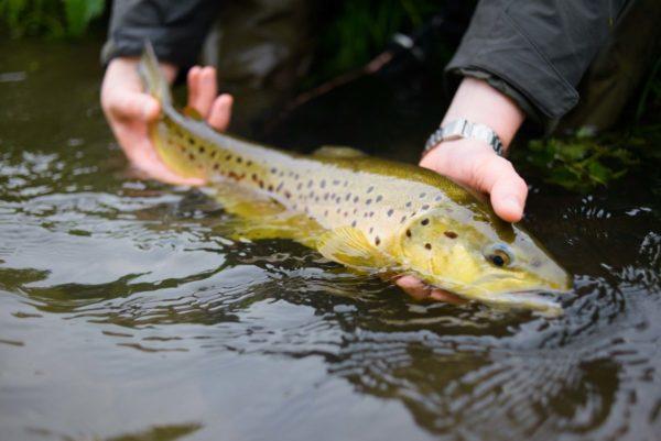 Mayfly, chalkstream, river test, river anton, river avon,