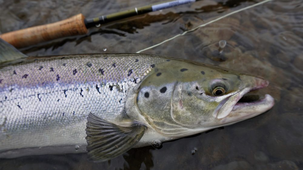 Katka Svagrova, French leader fishing, Atlantic salmon, Laxa I Kjos, Iceland, Aardvark McLeod