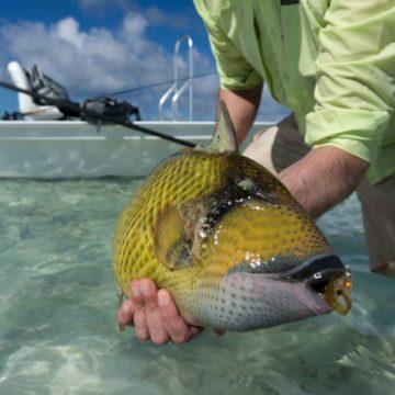 Alphonse Island, St Francois atoll, Seychelles, fishing Astove, fishing in Seychelles, GTs, giant trevally, bonefish, triggerfish, permit, Aardvark McLeod
