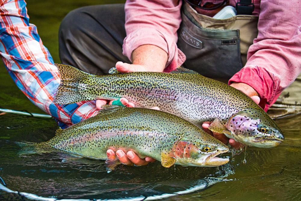 Zhupanova Kamchatka Trout fishing, Russia