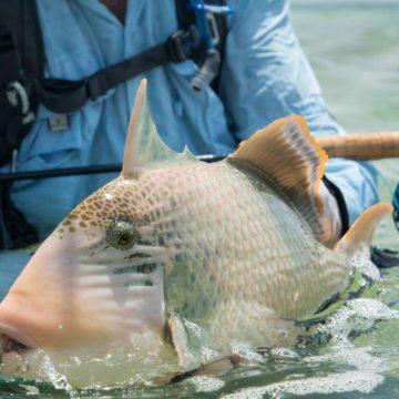 Triggerfish, Nubian Flats, Sudan, Aardvark McLeod