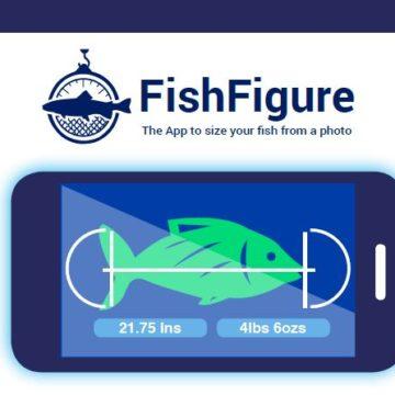 FishFigure