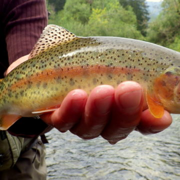 Fly fishing Slovenia, Aardvark McLeod