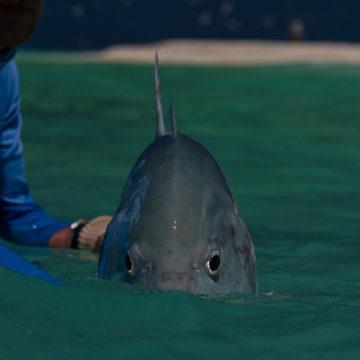 Farquhar atoll Seychelles GT Aardvark McLeod