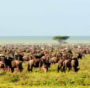 Aardvark McLeod Kenya migration