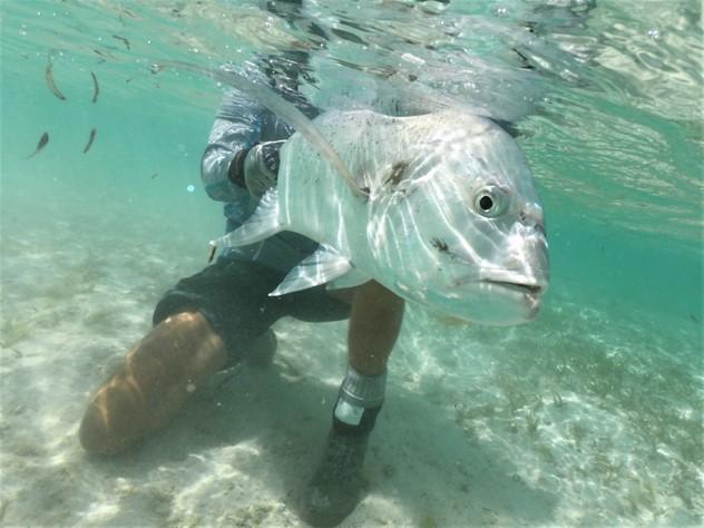 Alphonse, St Francois, Aardvark McLeod Seychelles, GT tagging, GT fishing, GT tagging programme, Caitlin McGarigal, Seychelles fishing