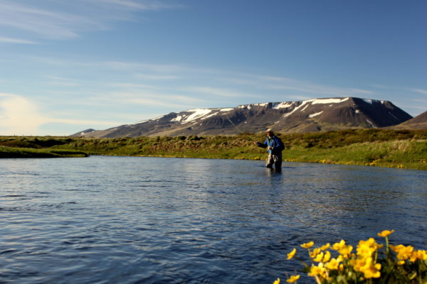 Trout Fishing Fremri Asum Iceland