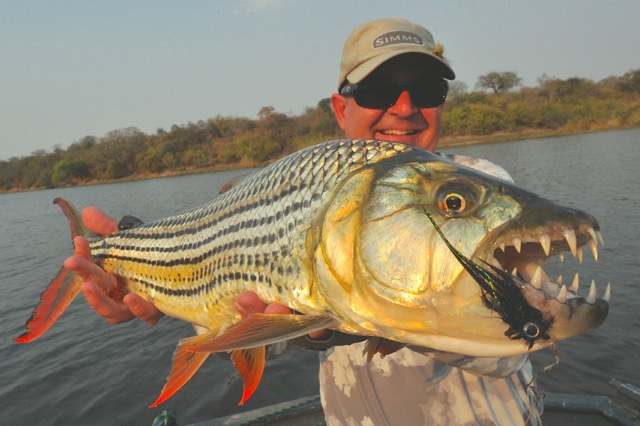 Tigerfish, tigerfish on fly, Tanzania tigerfish, Botswana tigerfish, Chobe tigerfish, catfish run Botswana, catfish run, Aardvark McLeod