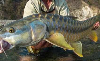 India, mahseer, Saryu and Mahakali, fishing, Aardvark McLeod