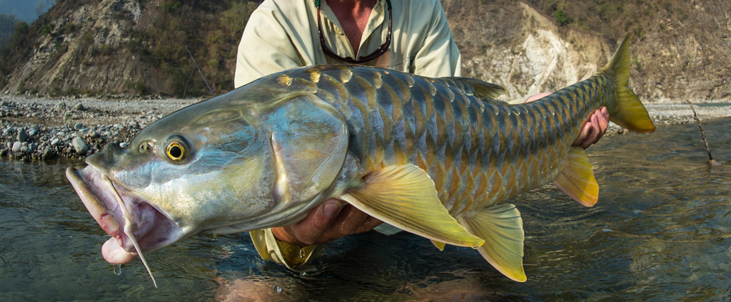 India, mahseer, Saryu and Mahakali, fishing, Aardvark McLeod