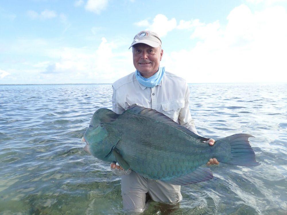 Farquhar Bumphear Parrotfish