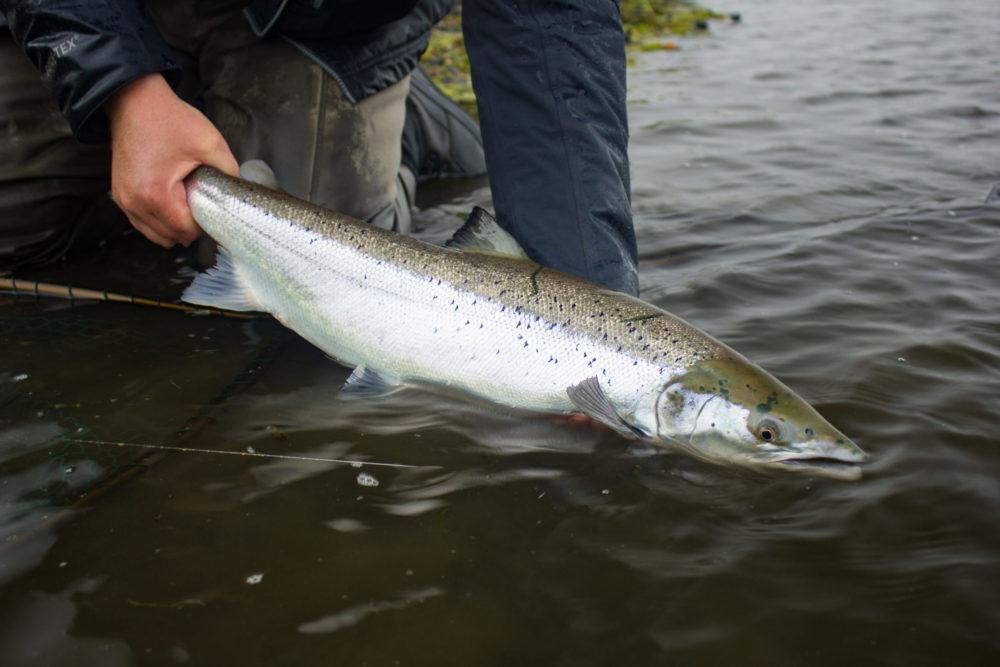 West Rangá, Iceland, Salmon Fishing, Iceland Fishing Guide