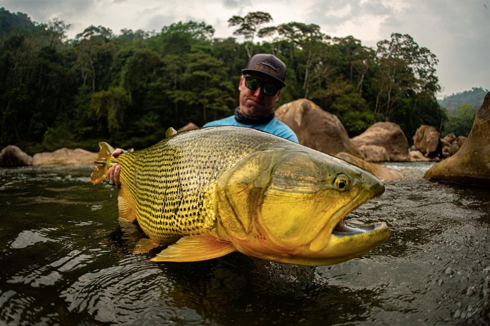 Tsimane Golden Dorado Pacu Jungle