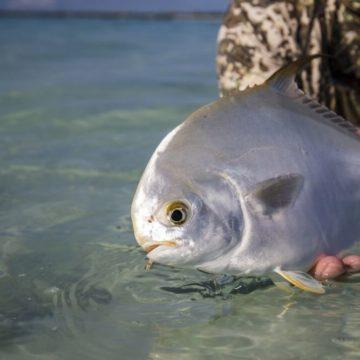 Farquhar Atoll, Seychelles, Aardvark McLeod