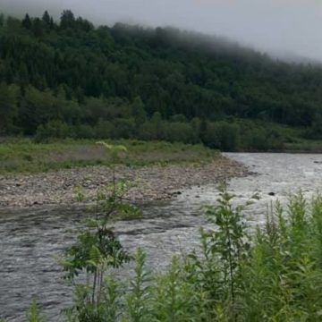 Gaula River Norway, Norwegian Fly Fishers Club Norway, NFC Norway, Atlantic salmon Norway, Salmon Fly Fishing Norway