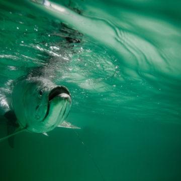 El Pescador Belize, Belize fishing, family, Aardvark McLeod Belize, Belize tarpon, tarpon fishing Belize